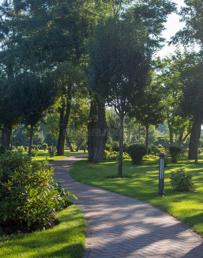 Parque hermoso del verano con los árboles e hierba y calzada verdes Paisaje temprano del jardín del otoño imagen de archivo libre de regalías