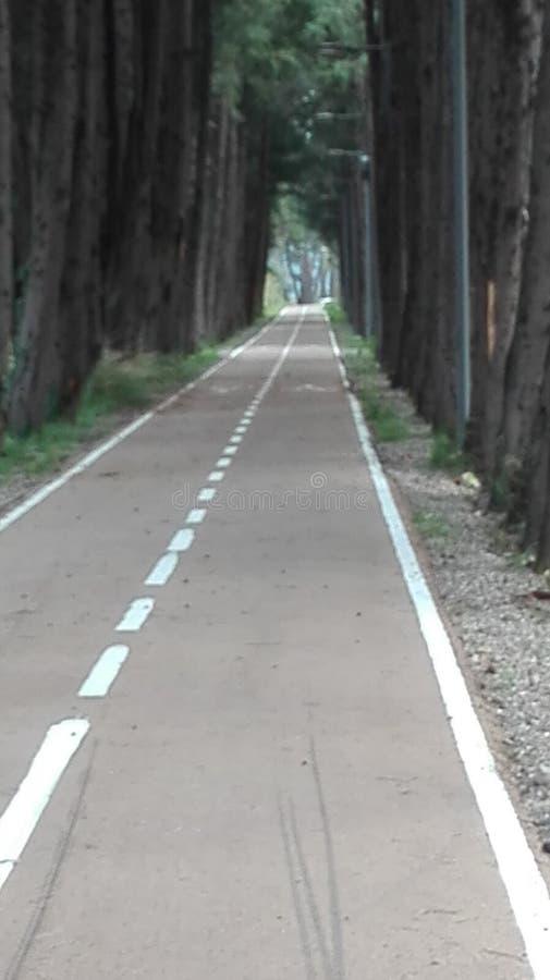 Parque Italia Toscânia do outono imagem de stock royalty free