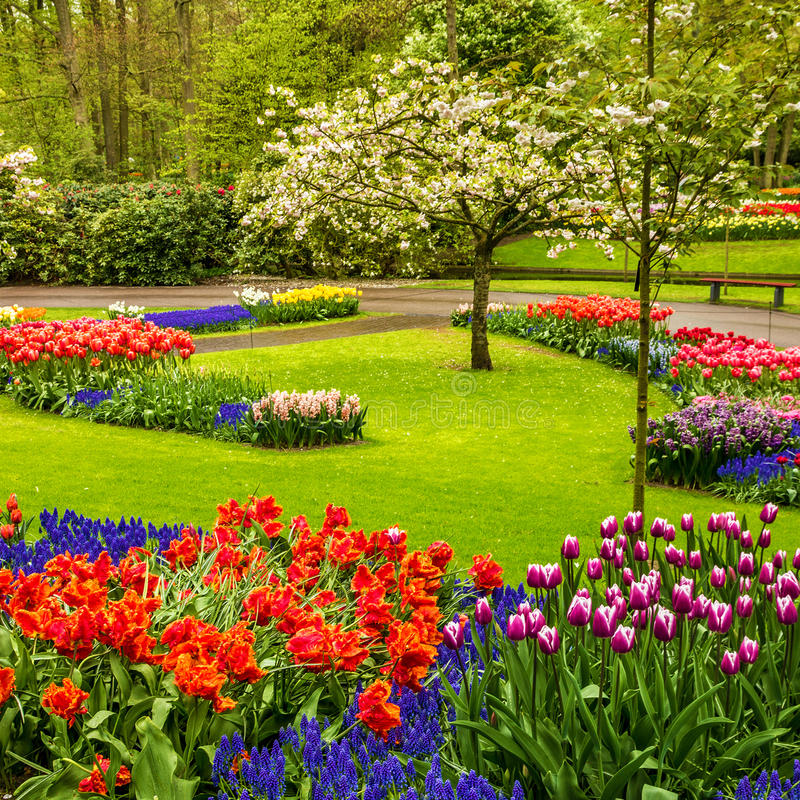 parque keukenhof jard n de flores del tulip n holanda foto de archivo imagen 78878298. Black Bedroom Furniture Sets. Home Design Ideas