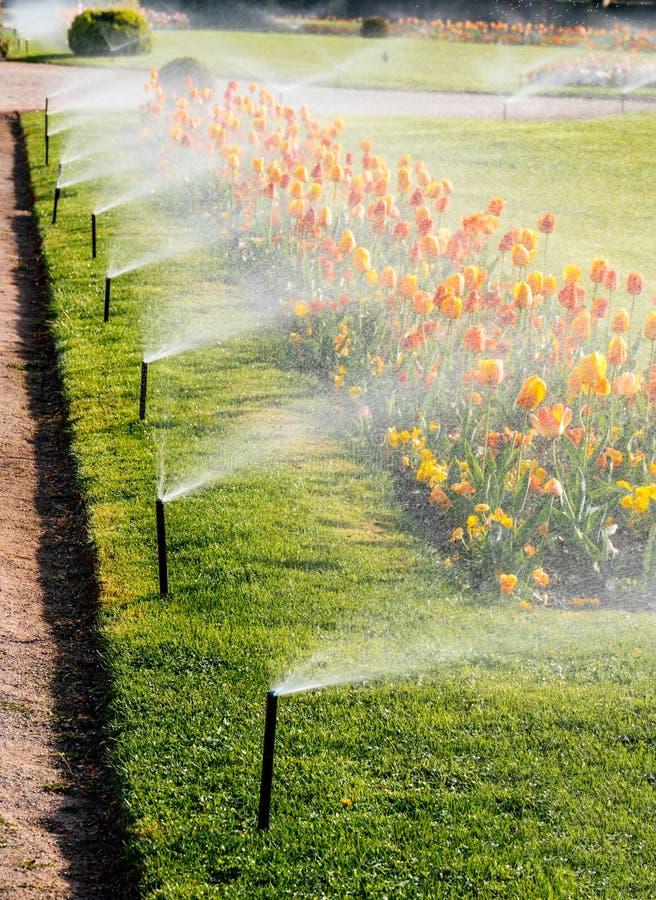Parque luxuoso do jardim esperto com sistema automático da irrigação de sistema de extinção de incêndios fotografia de stock royalty free