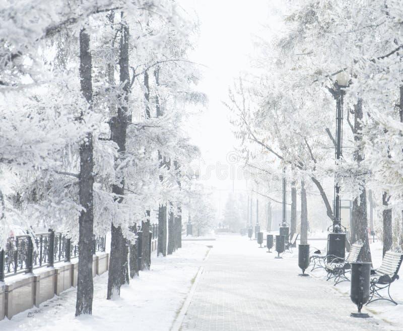 Parque mágico de la ciudad del invierno que brilla intensamente por luz del sol Paisaje de la ciudad Nevado Árboles hermosos en l imagen de archivo libre de regalías