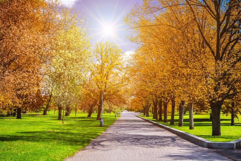 Parque mágico del otoño con la trayectoria y el resplandor fantástico, tierra del cuento de hadas fotos de archivo libres de regalías