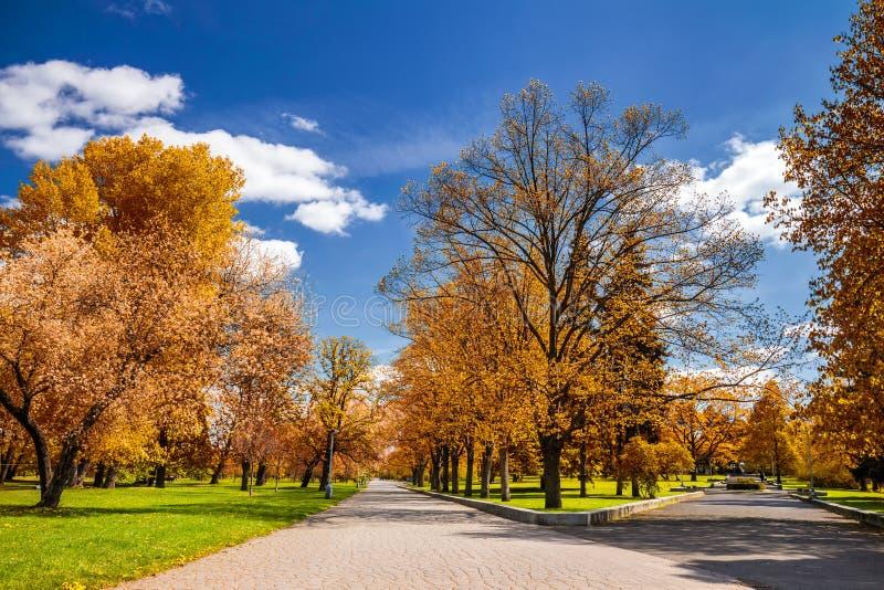 Parque mágico del otoño con la trayectoria y el resplandor fantástico, tierra del cuento de hadas imágenes de archivo libres de regalías