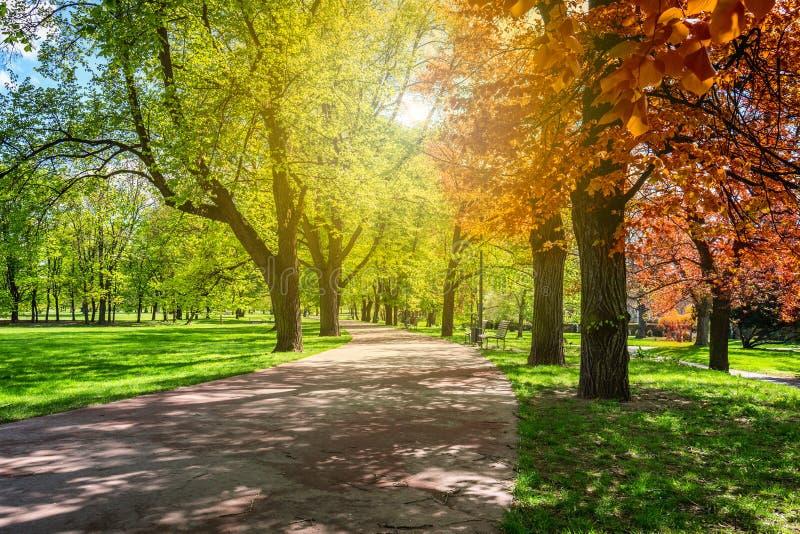 Parque mágico del otoño con la trayectoria y el resplandor fantástico, tierra del cuento de hadas fotografía de archivo