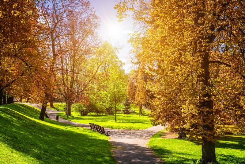 Parque mágico del otoño con la trayectoria y el resplandor fantástico, tierra del cuento de hadas foto de archivo