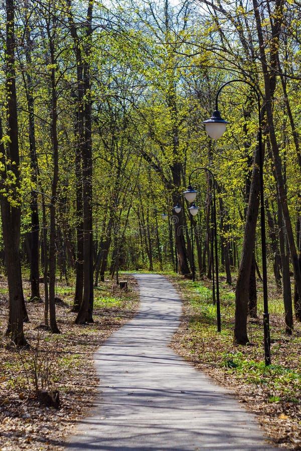 Parque na cidade durante o dia ensolarado com árvores, banco, trajeto da estrada, lanternas da lâmpada na primavera fotos de stock royalty free