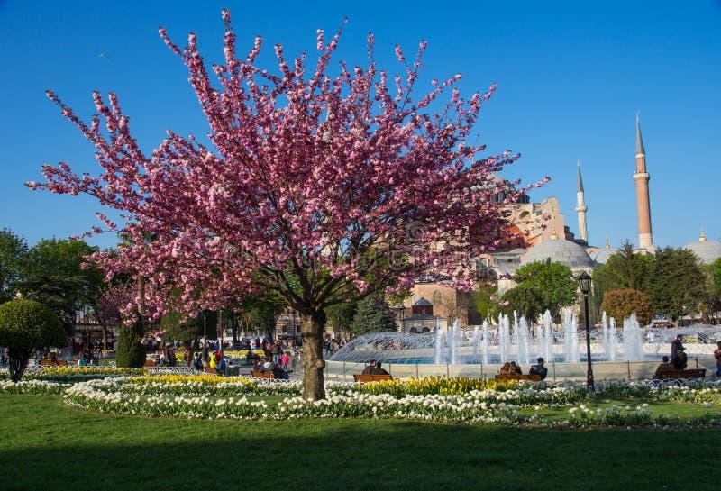 Parque na frente de Hagia Sófia na primavera imagem de stock