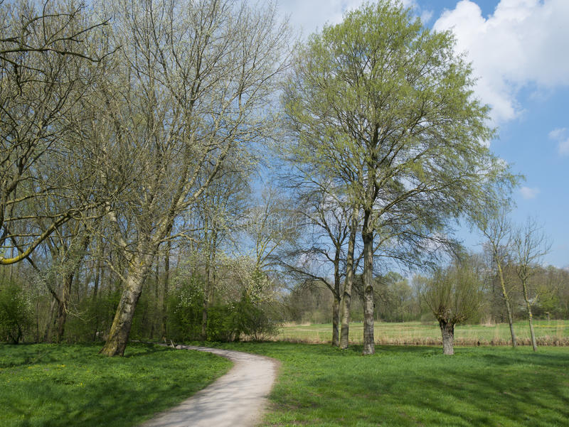 Parque na mola adiantada fotografia de stock royalty free