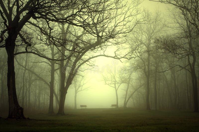 Parque na névoa imagem de stock