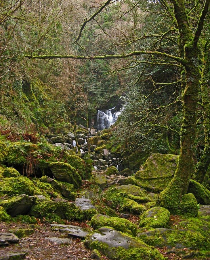 Parque nacional 07 de Killarney foto de archivo