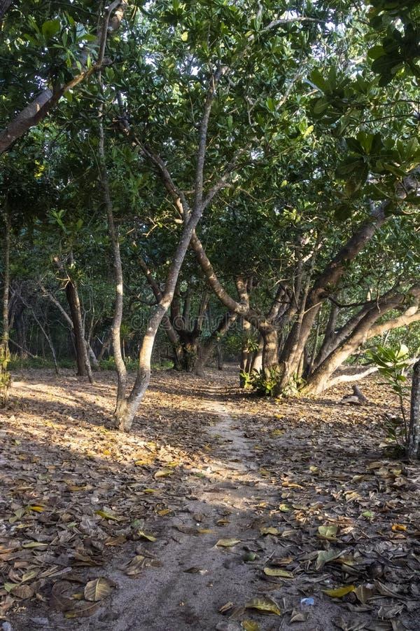 Parque nacional Alas Purwo imagem de stock
