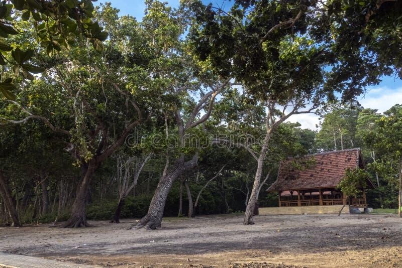 Parque nacional Alas Purwo fotografia de stock