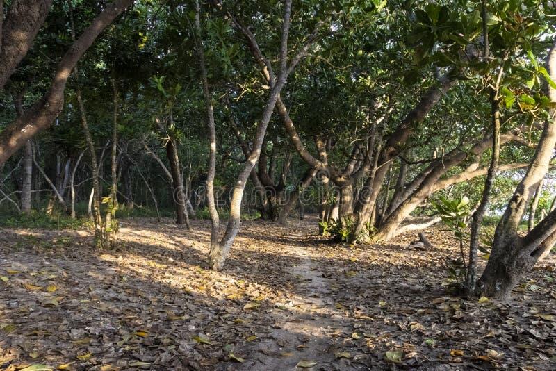 Parque nacional Alas Purwo imagem de stock royalty free