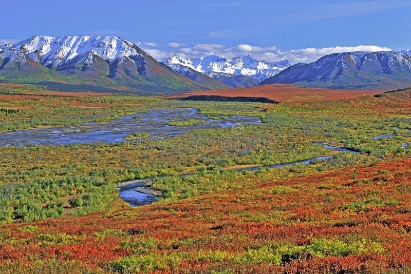 Parque nacional Alaska de Denali fotografía de archivo