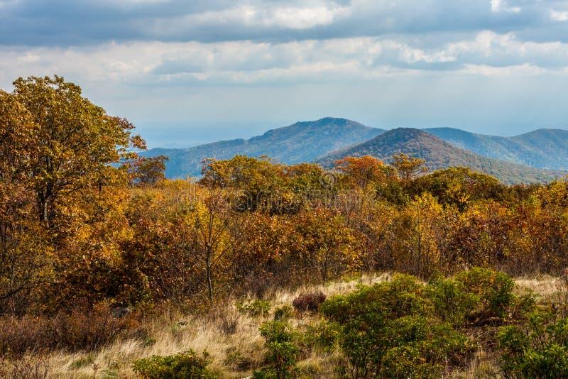 Parque nacional Autumn Scene de Shenandoah imagem de stock
