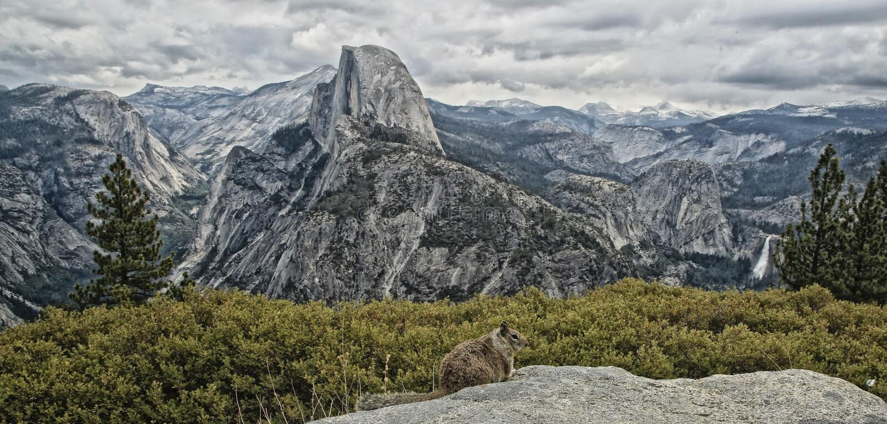 Parque nacional California de Yosemite de la media bóveda foto de archivo libre de regalías