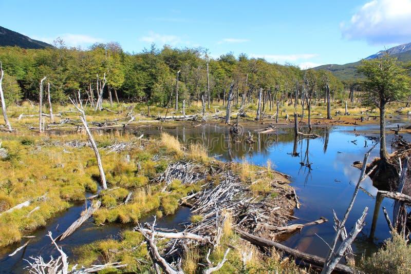 Parque nacional com uma represa dos beaverfotos de stock