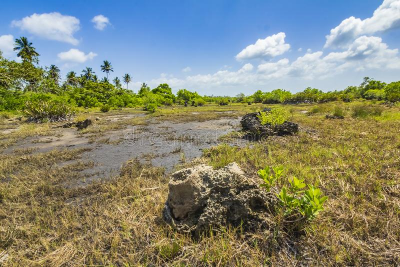Parque nacional da baía de Jozani Chwaka do pântano da floresta da selva, Zanzibar, T foto de stock
