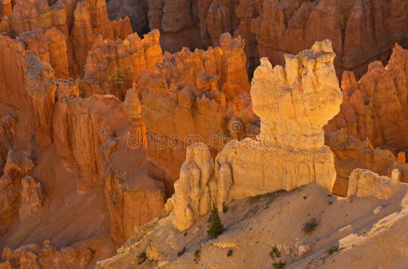 Parque nacional da garganta de Bryce fotos de stock