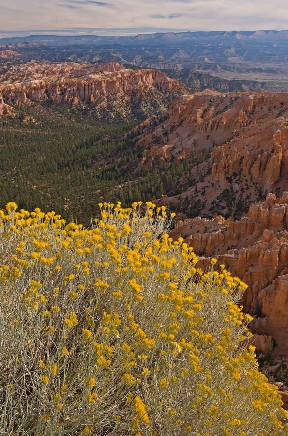 Parque nacional da garganta de Bryce imagens de stock