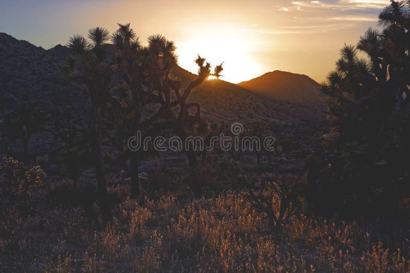 Parque nacional de árvore de Joshua foto de stock royalty free