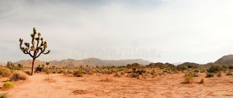 Parque nacional de árvore de Joshua do panorama fotos de stock