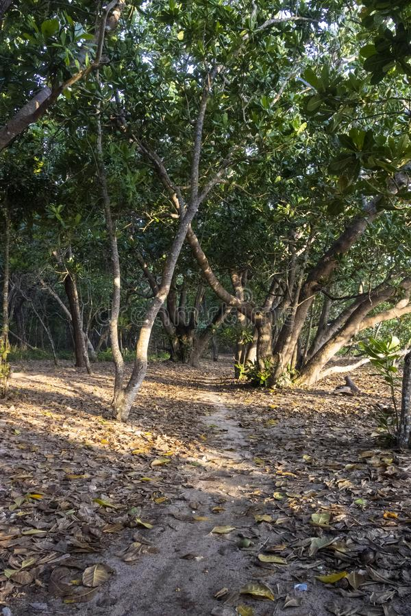 Parque nacional de Alas Purwo imagen de archivo