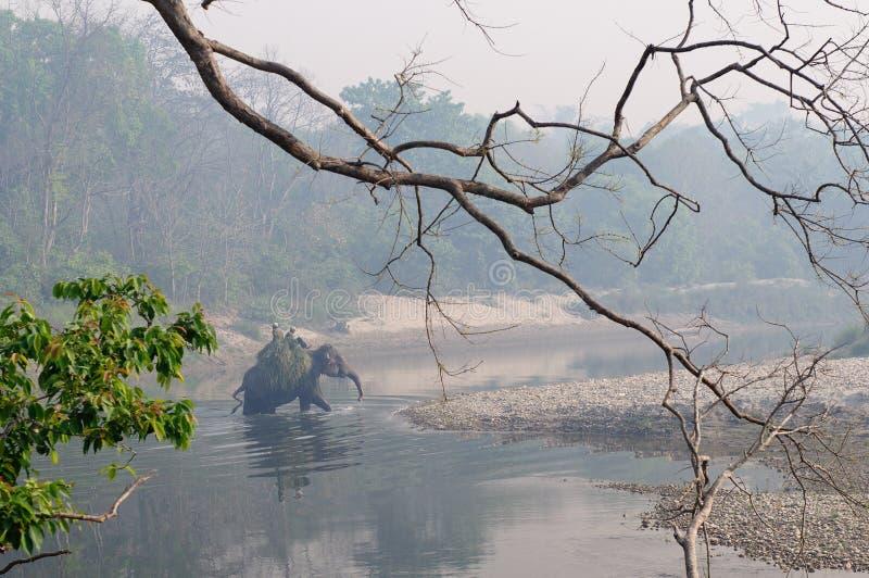 Parque nacional de Bardia em Nepal foto de stock