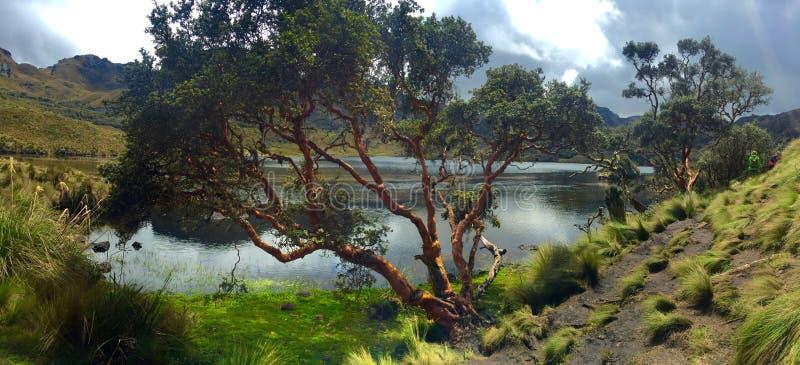 Parque nacional de Cajas imagens de stock royalty free