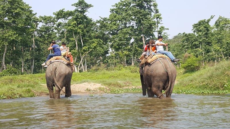 Parque nacional de Chitwan imagen de archivo