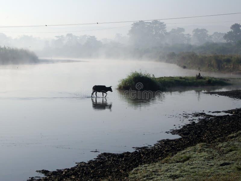 Parque nacional de Chitwan fotografía de archivo libre de regalías