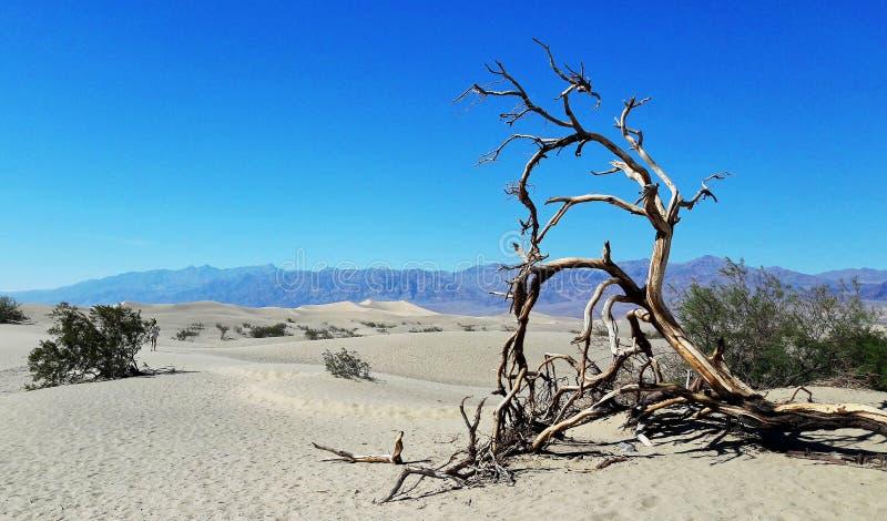 Parque nacional de Death Valley, Nevada, los E.E.U.U. fotos de archivo libres de regalías
