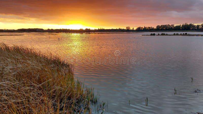 Parque nacional de Doñana, Huelva, España fotografía de archivo