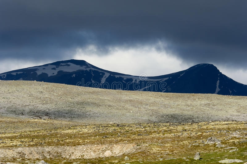 Parque nacional de Dovrefjell fotos de stock royalty free
