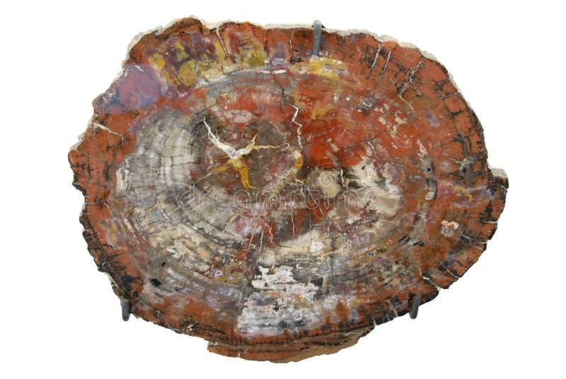Parque nacional de floresta Petrified - o Arizona. imagem de stock royalty free