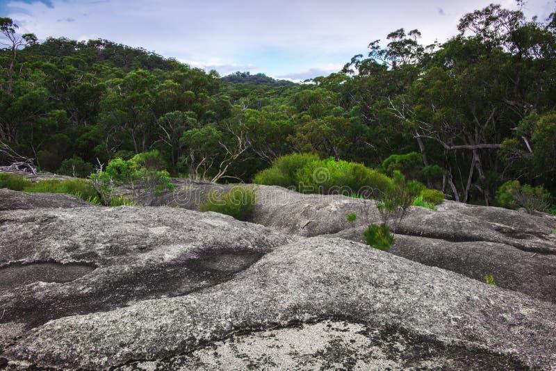Parque nacional de Girraween foto de archivo
