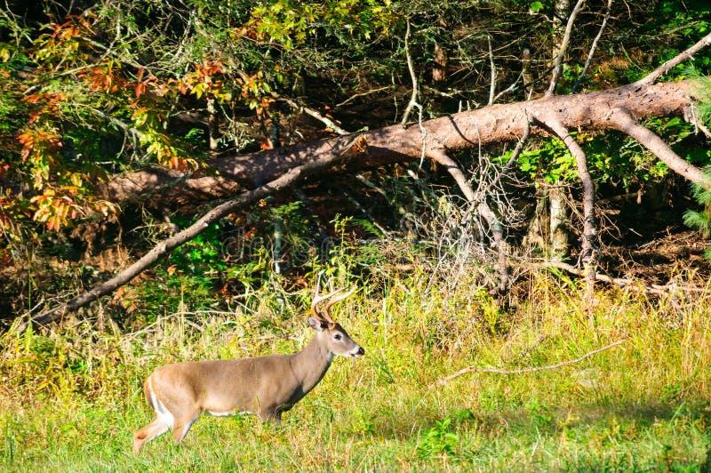 Parque nacional de Great Smoky Mountains imagem de stock royalty free