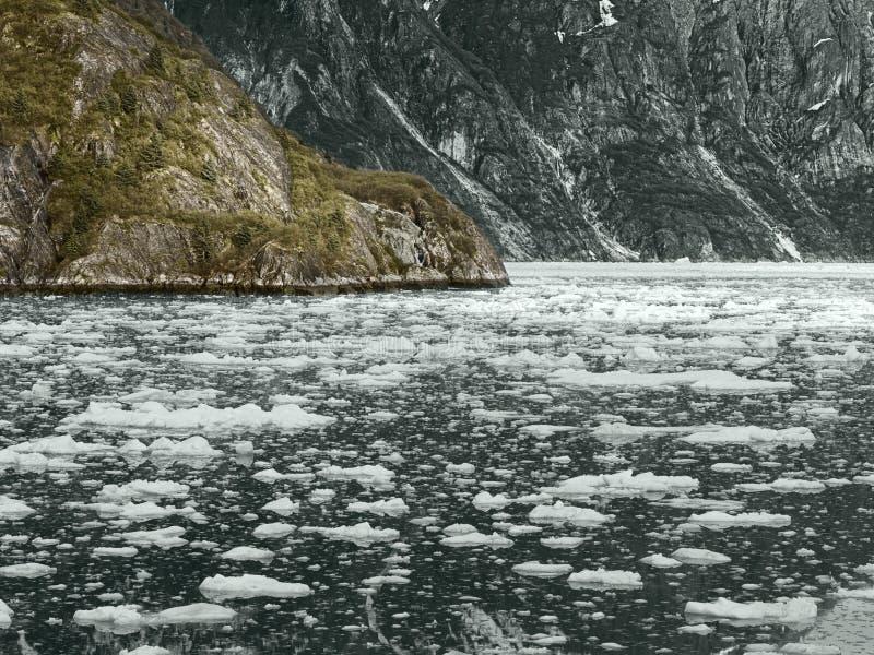 Parque nacional de la bahía de glaciar, Alaska imagen de archivo libre de regalías