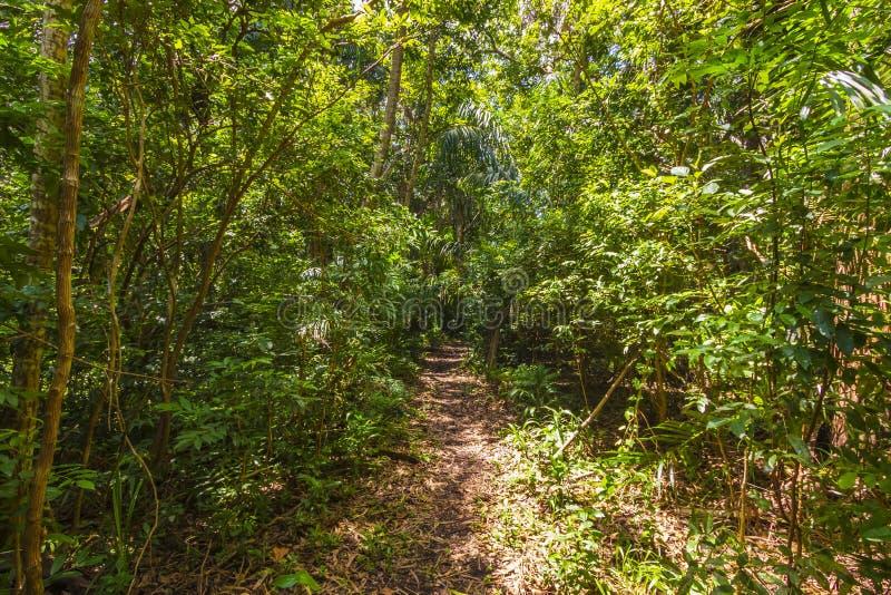 Parque nacional de la bahía de Jozani Chwaka del bosque de la selva, Zanzíbar, Tanzania fotografía de archivo