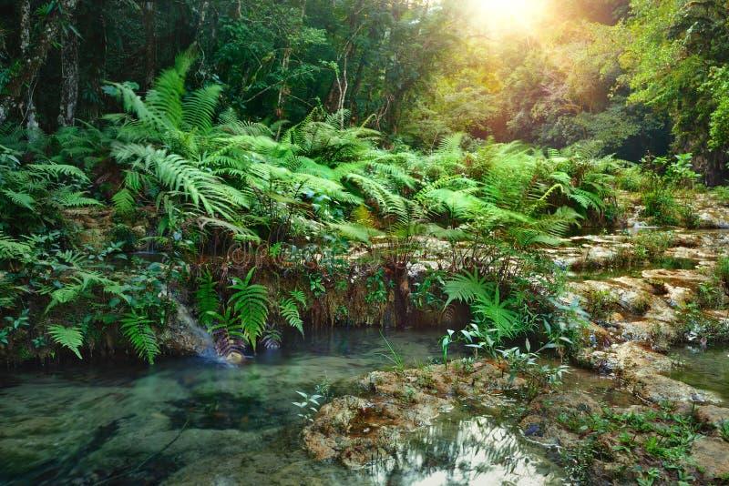 Parque nacional de las cascadas en Guatemala Semuc Champey en la puesta del sol. fotografía de archivo libre de regalías
