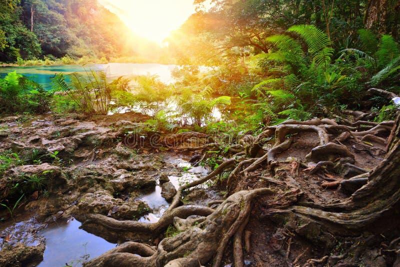 Parque nacional de las cascadas hermosas en Guatemala Semuc Champey imágenes de archivo libres de regalías