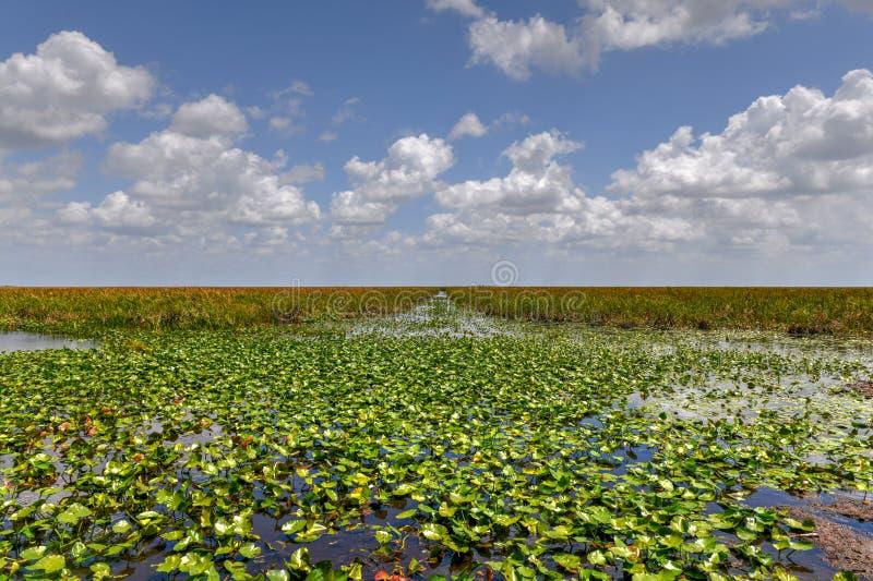 Parque nacional de los marismas - la Florida fotografía de archivo