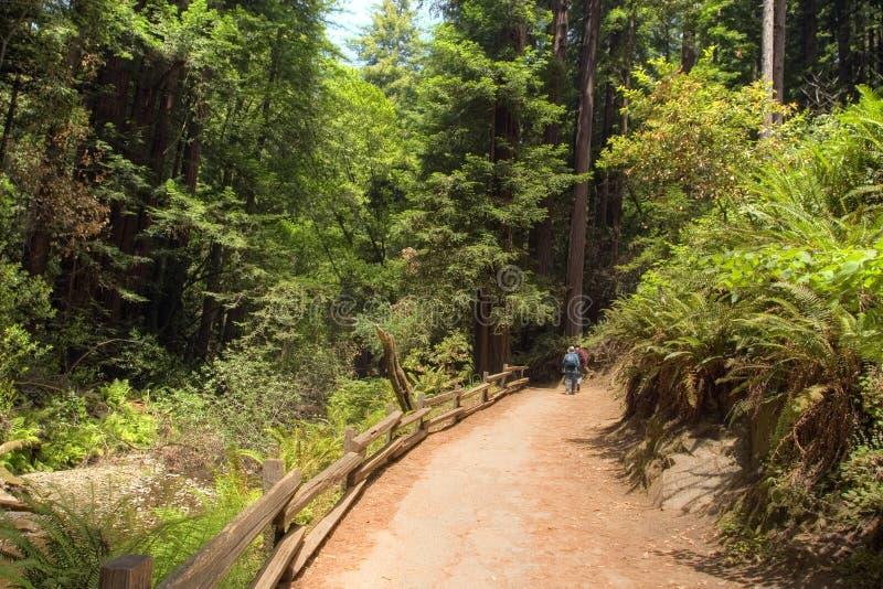 Parque nacional de maderas de Muir imágenes de archivo libres de regalías