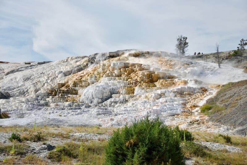 Parque nacional de Mammoth Hot Springs, Yellowstone fotos de stock