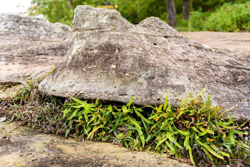 Parque nacional de Phu Hin Rong Kla, provincia de Phitsanulok fotos de archivo
