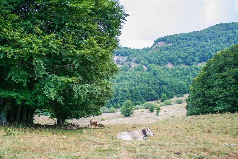 Parque nacional de Pollino fotografia de stock