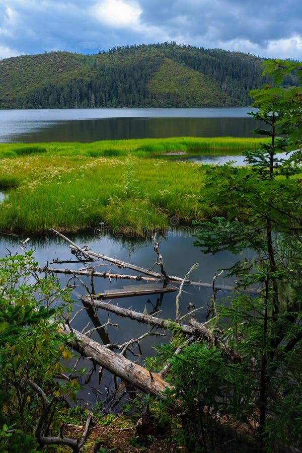 Parque nacional de Puda-Cuo, Shangri-La fotografia de stock