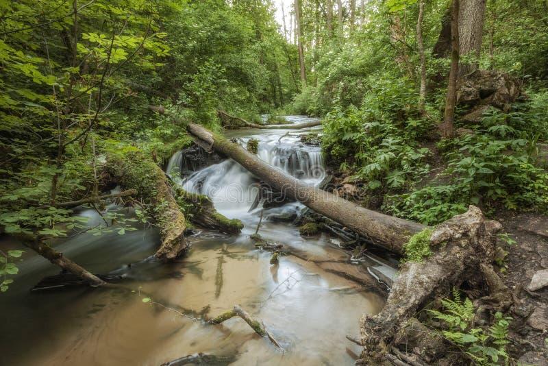 Parque nacional de Roztocze Roztochia Cascadas en el río de Sopot fotos de archivo
