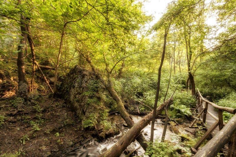 Parque nacional de Roztocze Roztochia Cascadas en el río de Sopot foto de archivo libre de regalías
