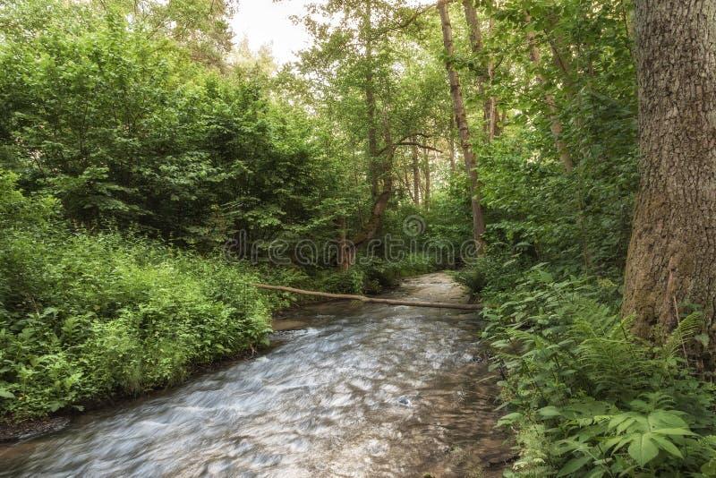 Parque nacional de Roztocze Roztochia Cascadas en el río de Sopot imágenes de archivo libres de regalías